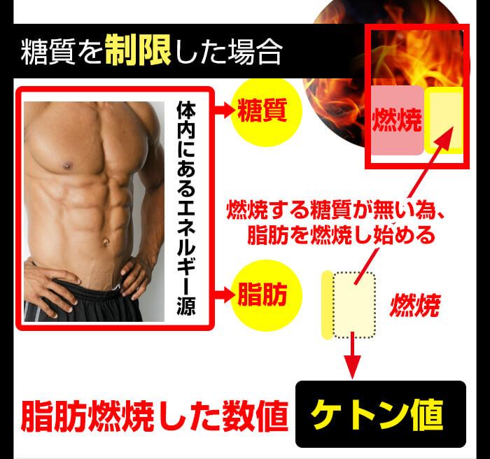 糖質制限すると脂肪が燃焼
